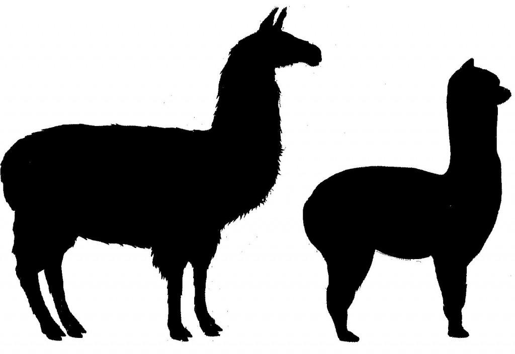 Llama clipart 8 2