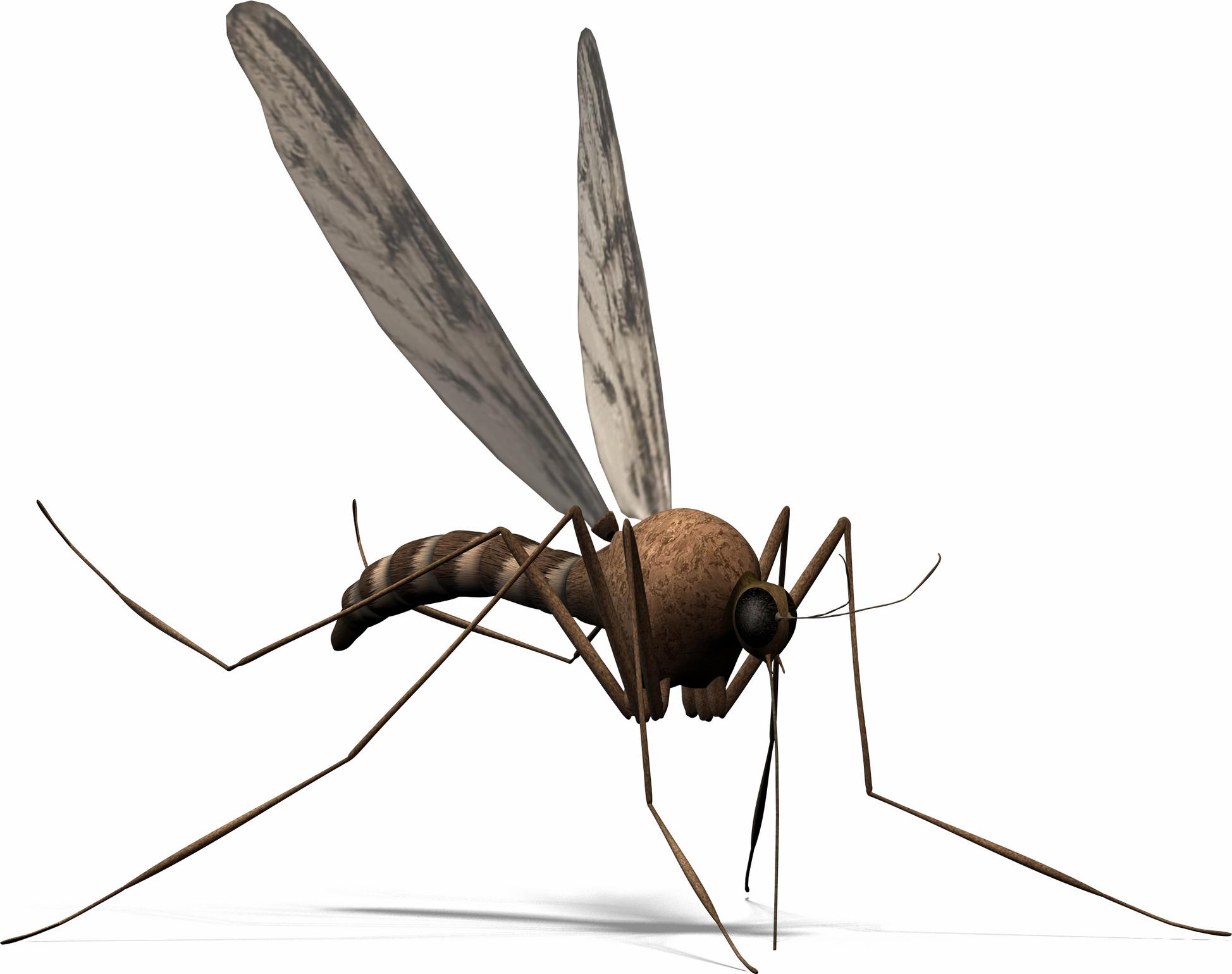 Mosquito clipart 0 3
