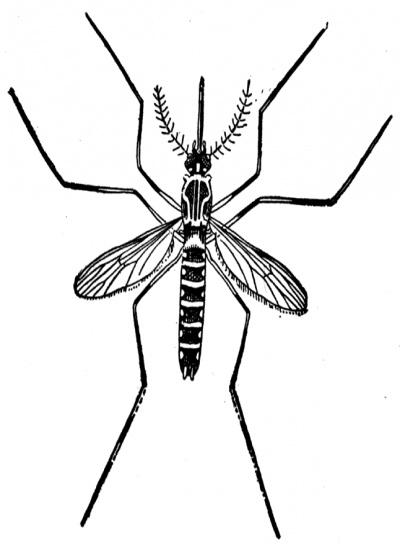 Mosquito clipart 1 2