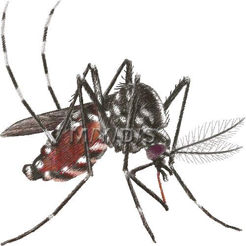 Mosquito clipart 1