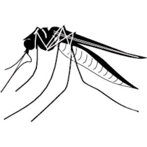 Mosquito clipart 5