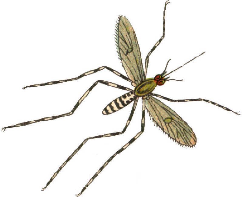Mosquito clipart for kids free images