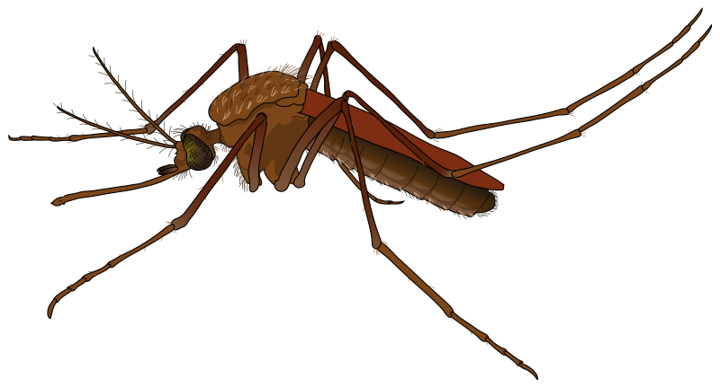 Mosquito free to use clip art