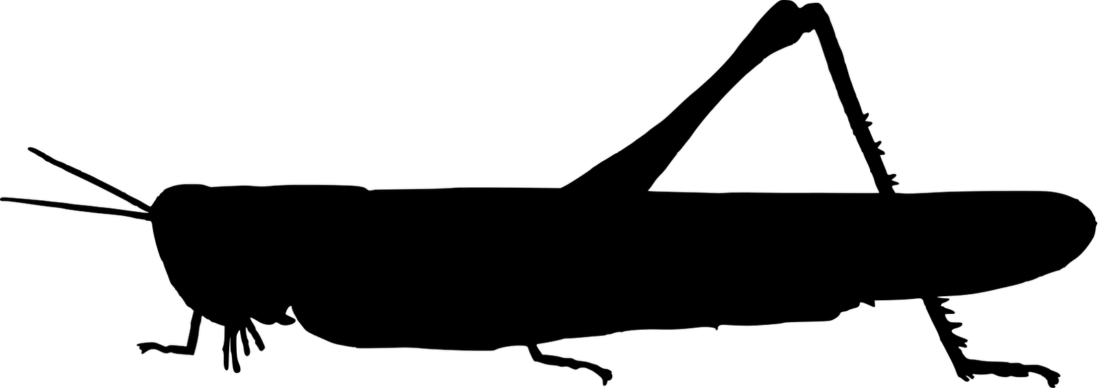 Silhouette grasshoppers clipart