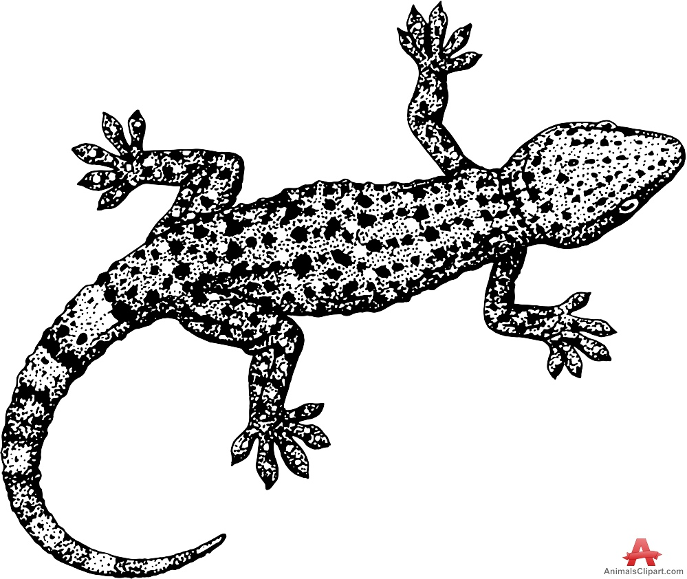 Spotted salamander lizard clipart free design download