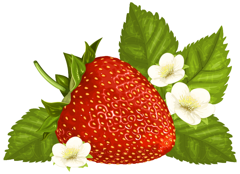 Strawberry clip art free clipart images 4