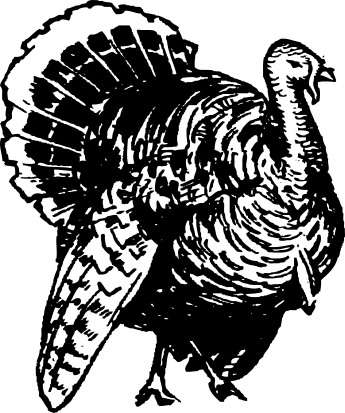 Turkey  black and white free turkey clipart 2 pages of free to use images