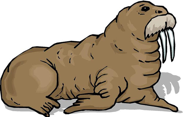 Walrus clip art free clipart images 2