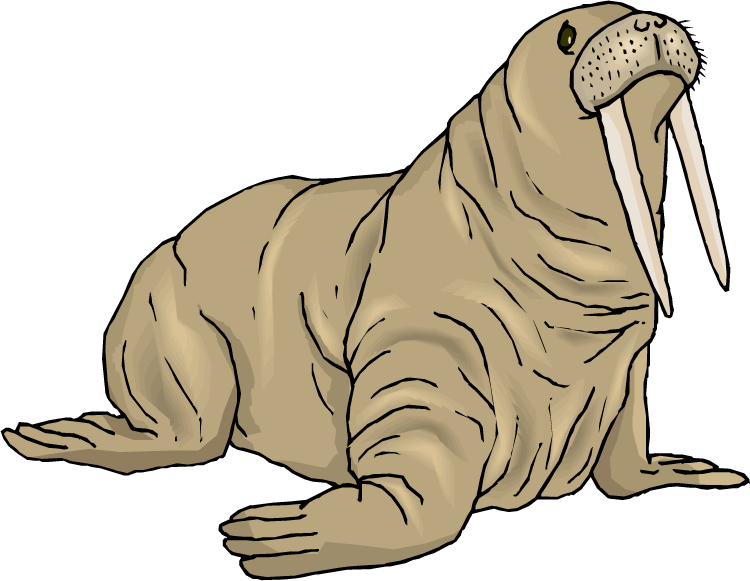 Walrus clip art free clipart images