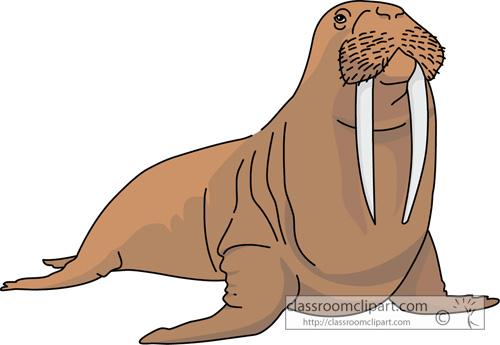 Walrus clipart 3
