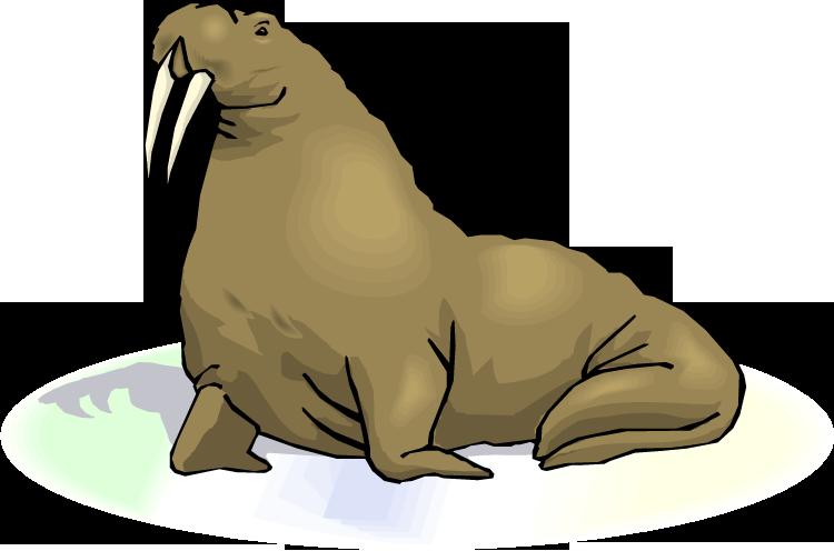 Walrus clipart 7