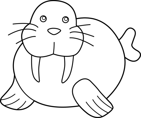 Walrus clipart 8
