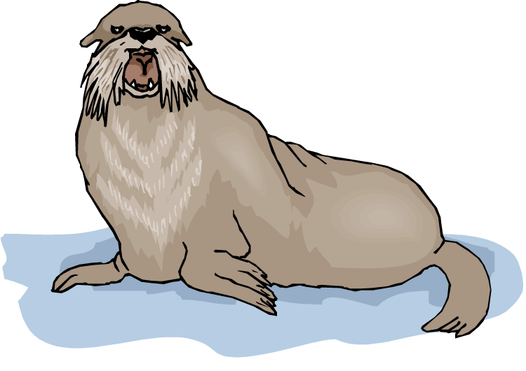 Walrus tusks clipart 2