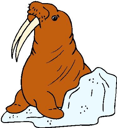 Walrus walross clipart clipart