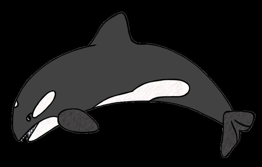 Whale clip art images free clipart 2
