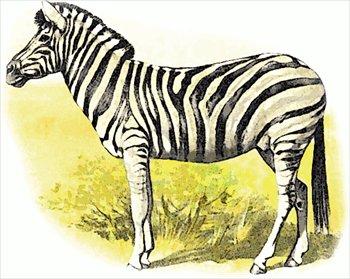 Zebra clip art free clipart images 3 2