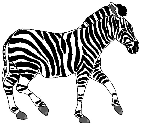 Zebra clipart free images