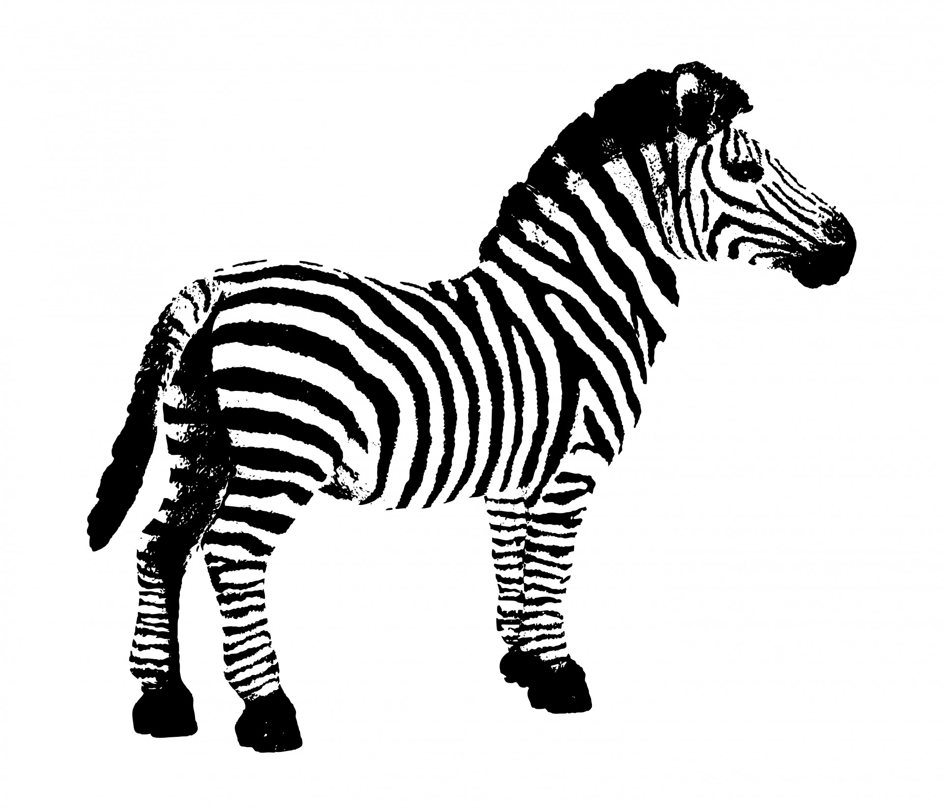 Zebra clipart free pictures