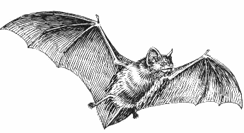Bat  black and white free dog clipart 1 page of clip art