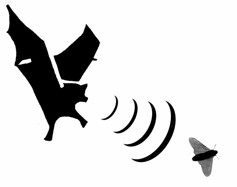 Bat  black and white halloween bat clipart free images 2