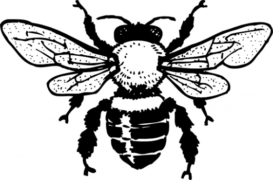 Bee  black and white bee clip art free vector in open office drawing svg
