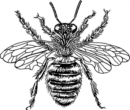 Bee  black and white bee clipart black and white clipart