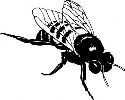 Bee  black and white white bees clipart 3