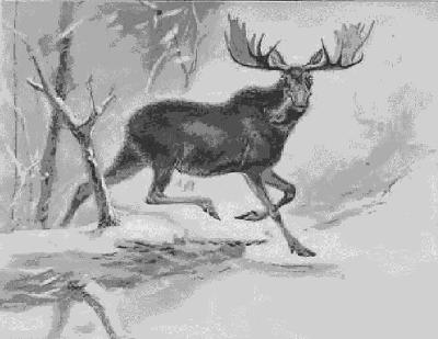 Cartoon moose clipart free clip art images image 9 2