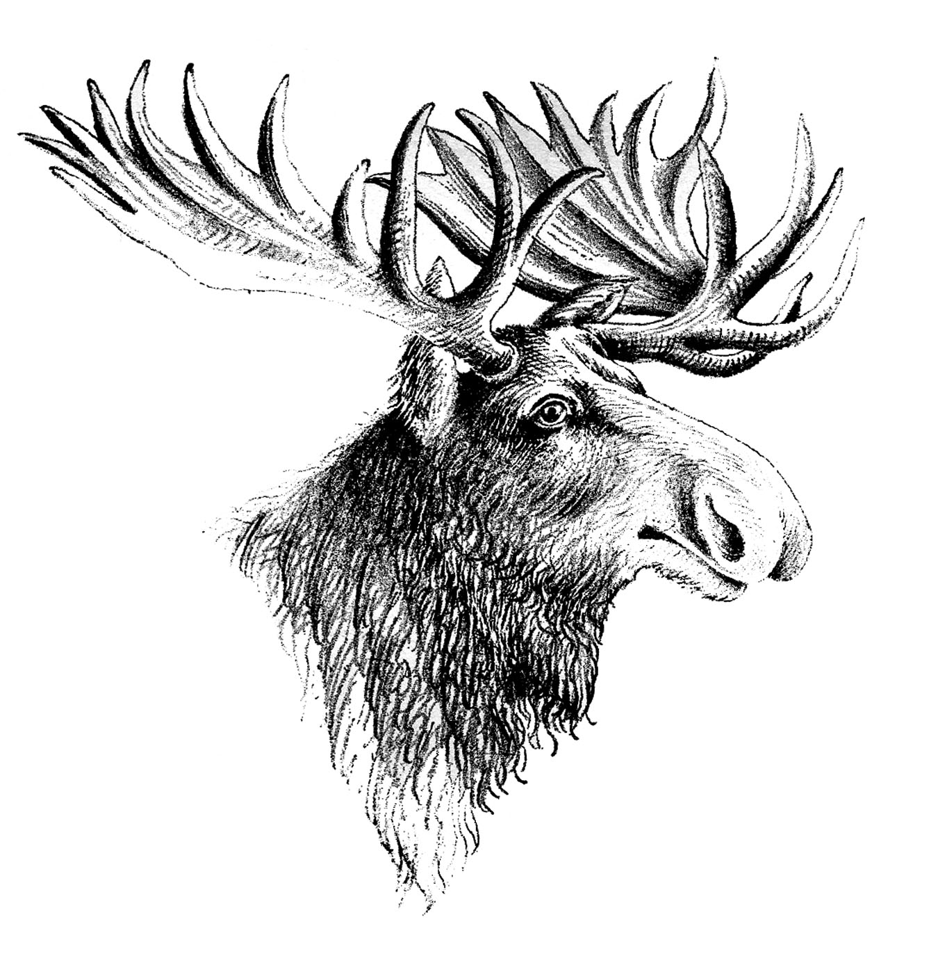 Cartoon moose clipart free clip art images image 9 3
