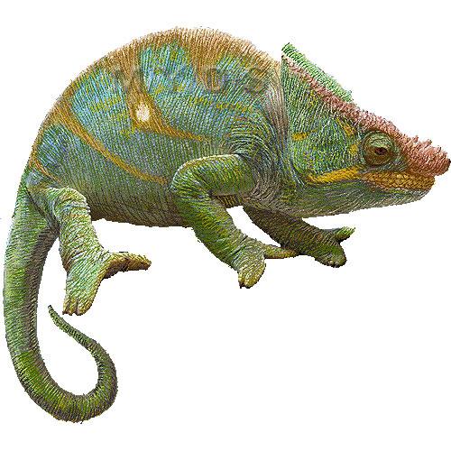 Chameleon clipart 4