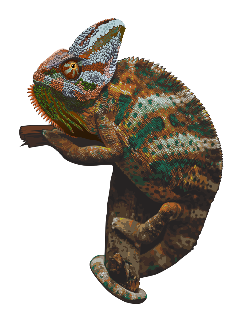 Chameleon free to use clip art