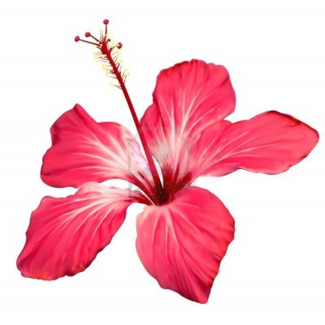 Clip art hawaiian flowers clipart free to use resource