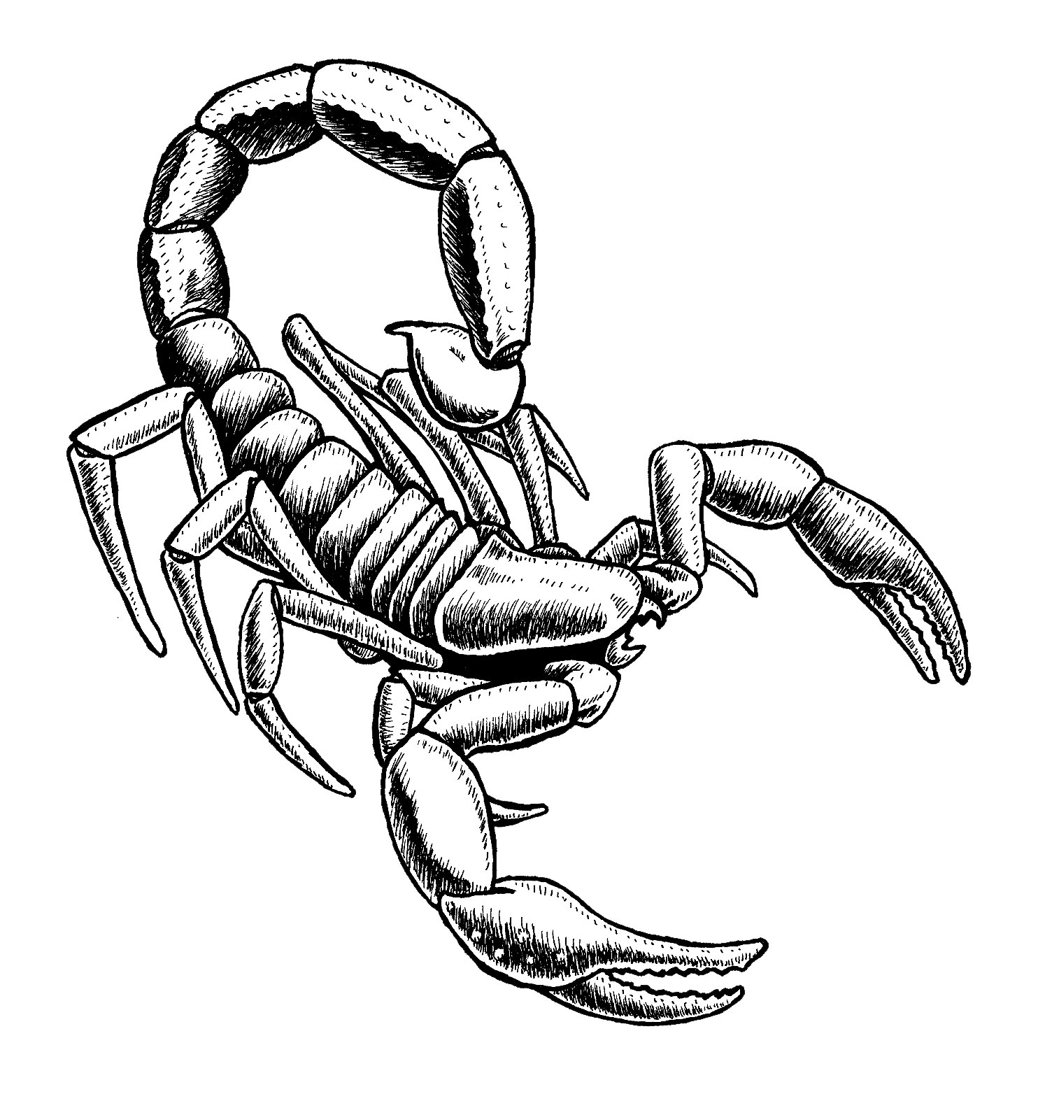 Draw scorpion clipart