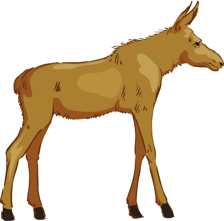 Free moose clipart 7