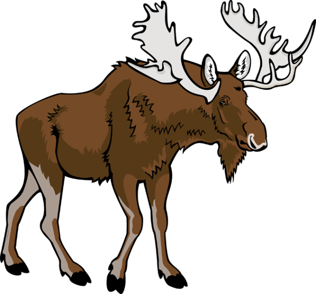 Free moose clipart pictures 2