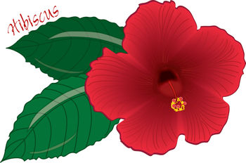 Hawaiian flower clipart tropical flowers free images