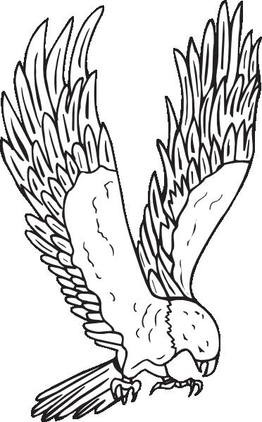 Hawk clip art clipart 2 2