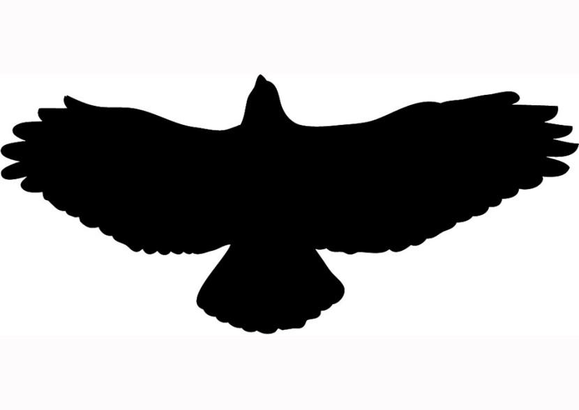 Hawk clip art clipart