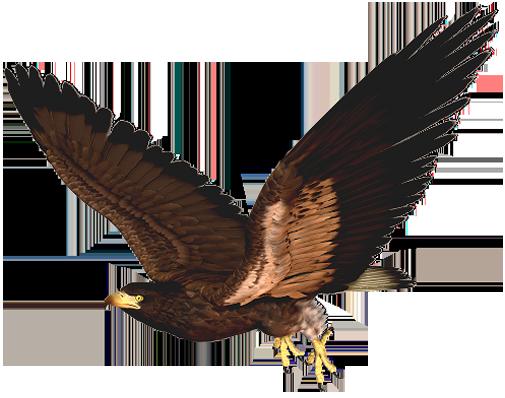 Hawk clip art free 2