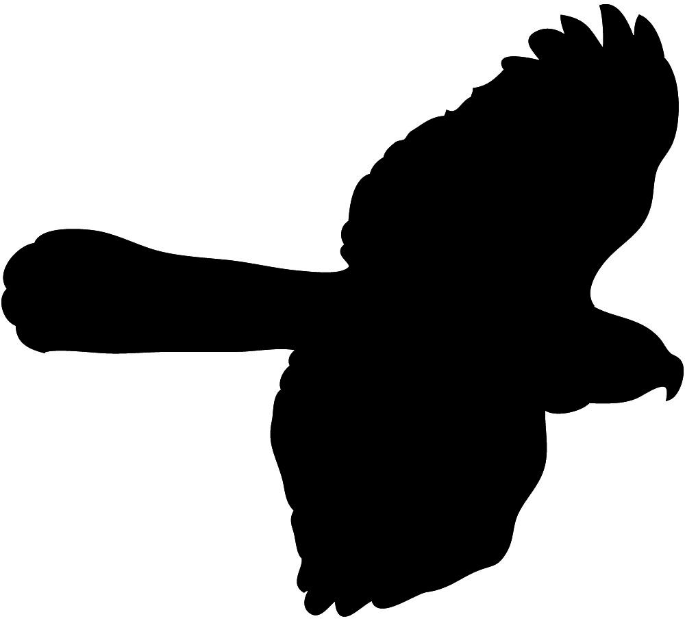 Hawk clipart 8 image 2