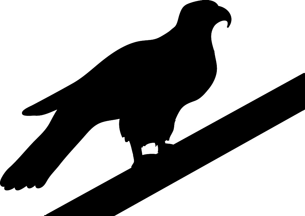 Hawk clipart hostted
