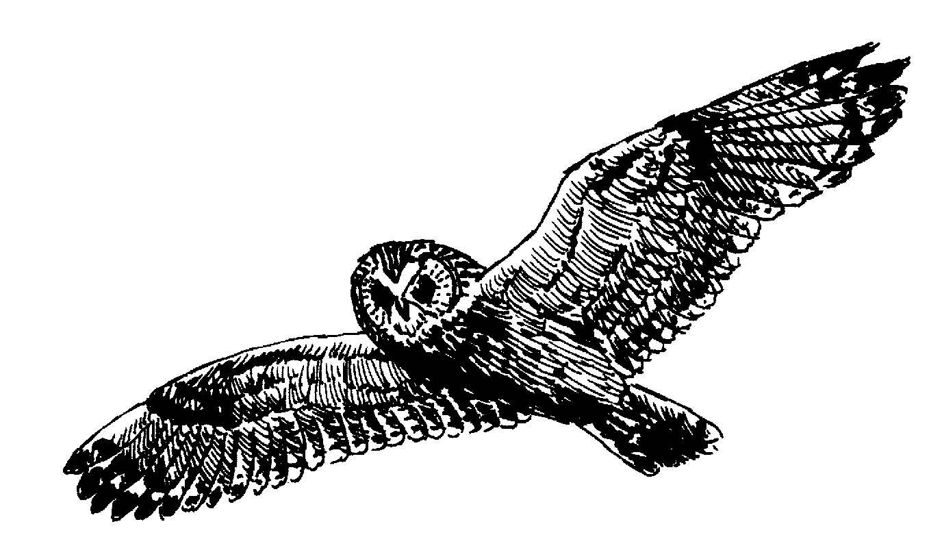 Hawk cliparts 2