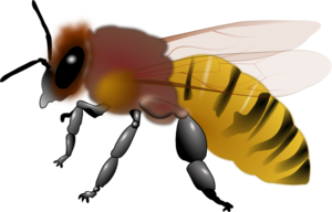 Hornet clip art at vector clip art