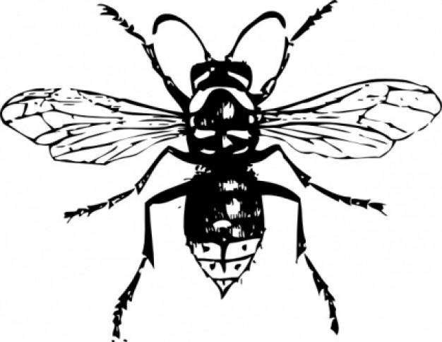 Hornet clip art free clipart images