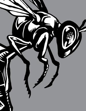Hornet vector artwork choose top clipart