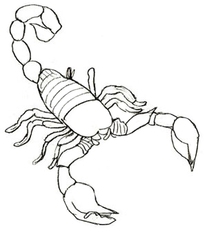 How to draw a scorpion clipart