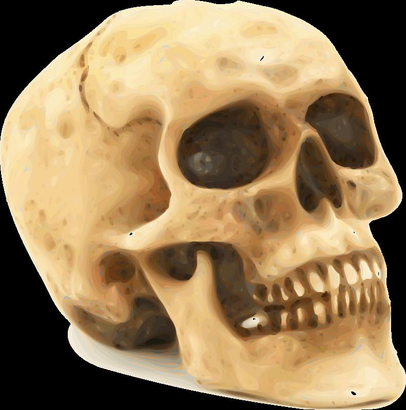 Human skull clipart 5