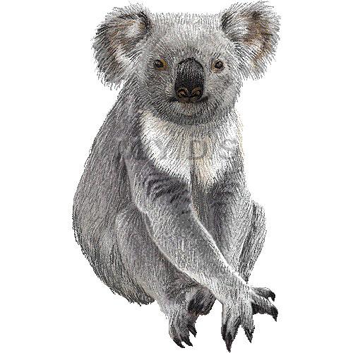 Koala clipart graphics free clip art