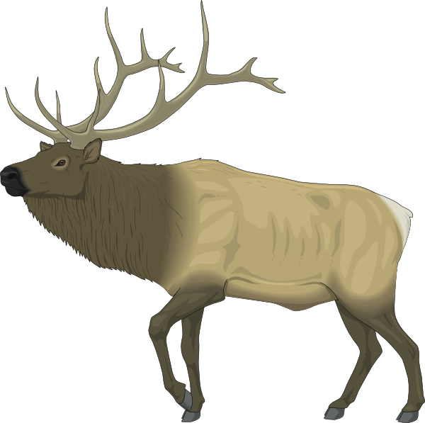 Moose clipart 11