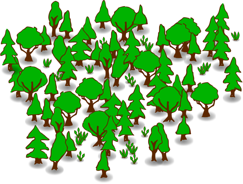 Rainforest clipart 11